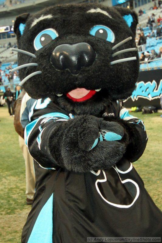 Sir purr- Carolina Panthers mascot.