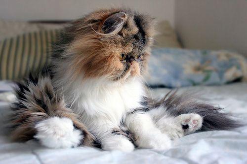 Cutest cat I've ever seen.