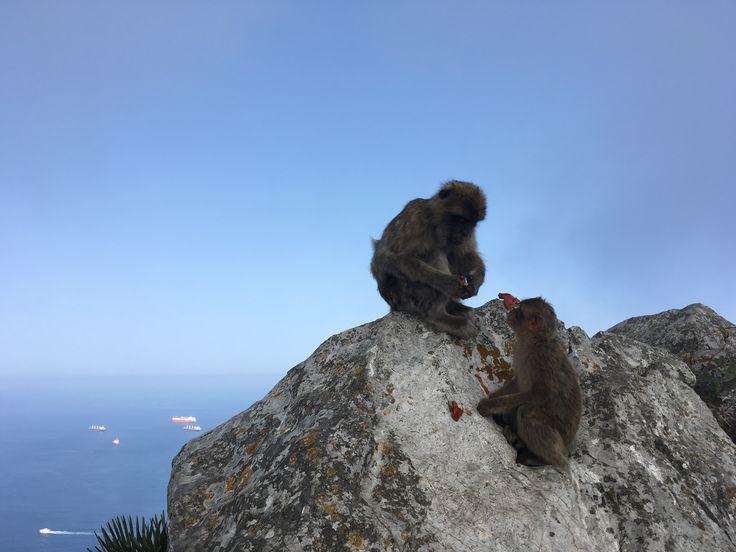 The Rock of Gibraltar, Gibraltar, UK