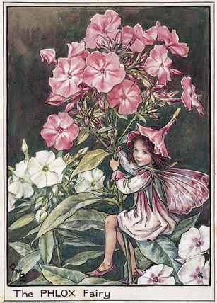 The Flower Fairies illustrations                                                                                                                                                                                 More