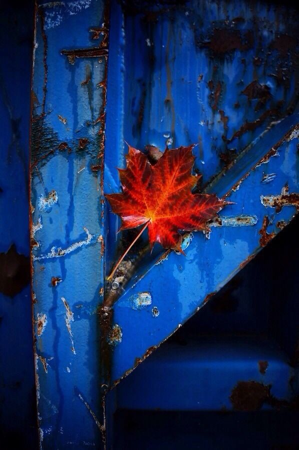 Red on cobalt