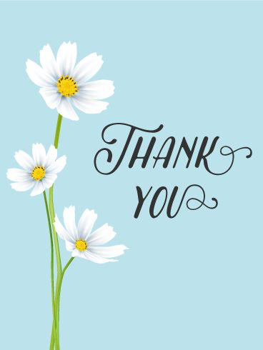 """White Cosmos Thank You Card. Saying """"thank you"""" is very important. We tell people """"thank you"""" all the time in our daily lives. If you don't have an opportunity to say so directly, why don't you send this thank you card to show your appreciation?"""