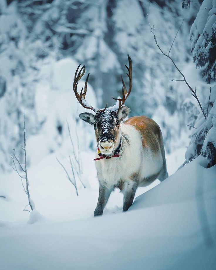 Photographer Shoots Finnish Forest Animals Like They're Professional Models, And We Can't Stop Looking At Them