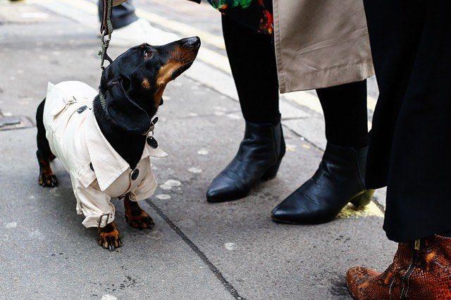 #londonfashionweek @britishfashioncouncil #fashionweek #lfw #aw16 #for #everyone #also #dogs  #doglover #instadog #dogfashion #brewerstreetcarpark #brewerstreet #streetwear #streetstyle #instablogger #instastyle #instafashion #fashionista #captured #by #fashion #photographer @volkervornehm #followme @vornehmphotography.tumblr.com & @volkervornehm.com