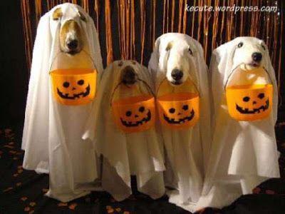 Perros disfrazados de Fantasma   Trato o truco