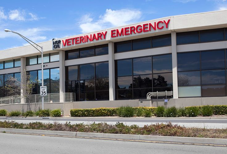 29 Best Vrcc Veterinary Hospital Tour Images On Pinterest Clinic Entrees And Hospital Design