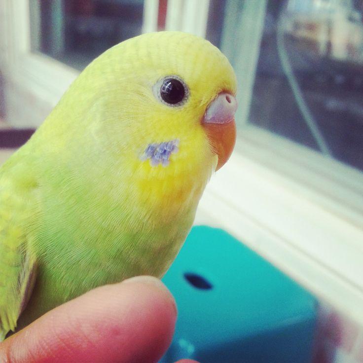 http://forevigt.tumblr.com/post/56874553634/cutie