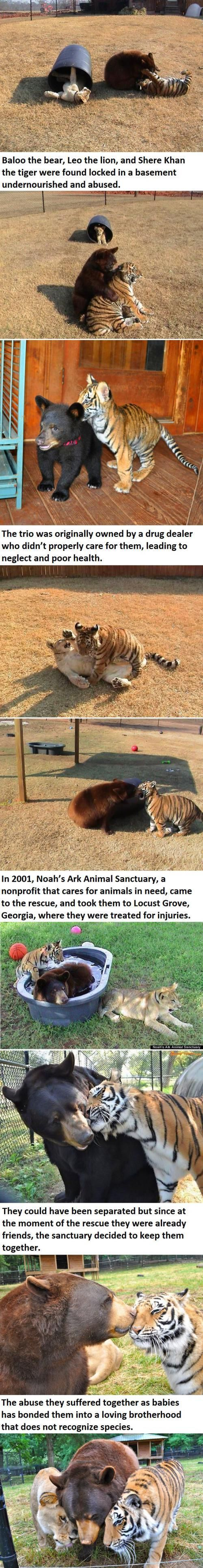Wish ALL people were as enlightened as these amazing animals.  Thank goodness many are.