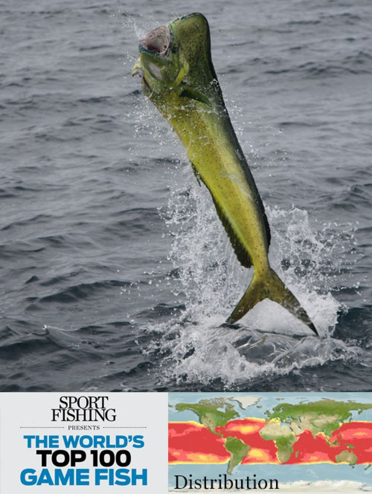 17 best images about the world 39 s top 100 game fish on for Fish world game