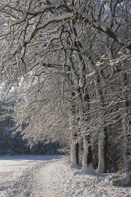 tiny white daisies - christmas - winter landscape