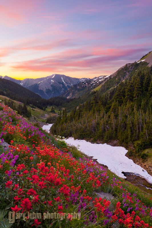 Indian (Scarlet) Paintbrush (Castilleja miniata) and Western Sweetbroom (Hedysarum occidentale) provide foreground for this Badger Valley sunrise in Olympic National Park. Digital composite.