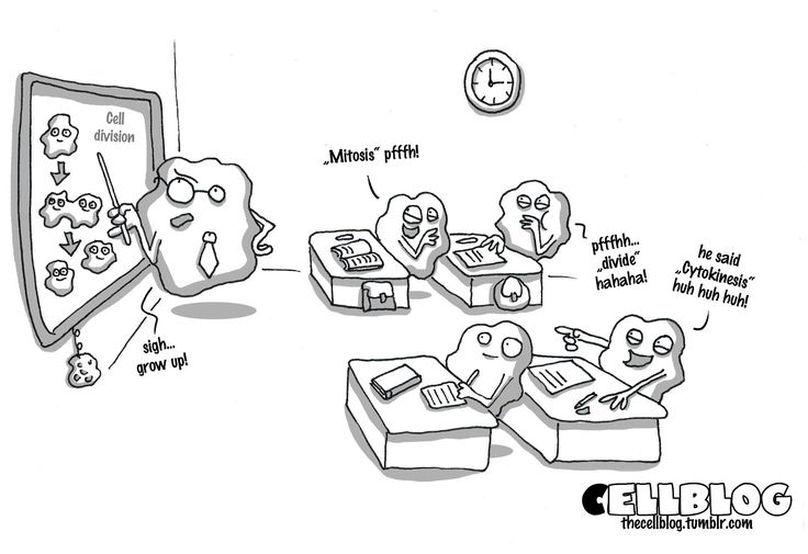 Image result for cell division comic