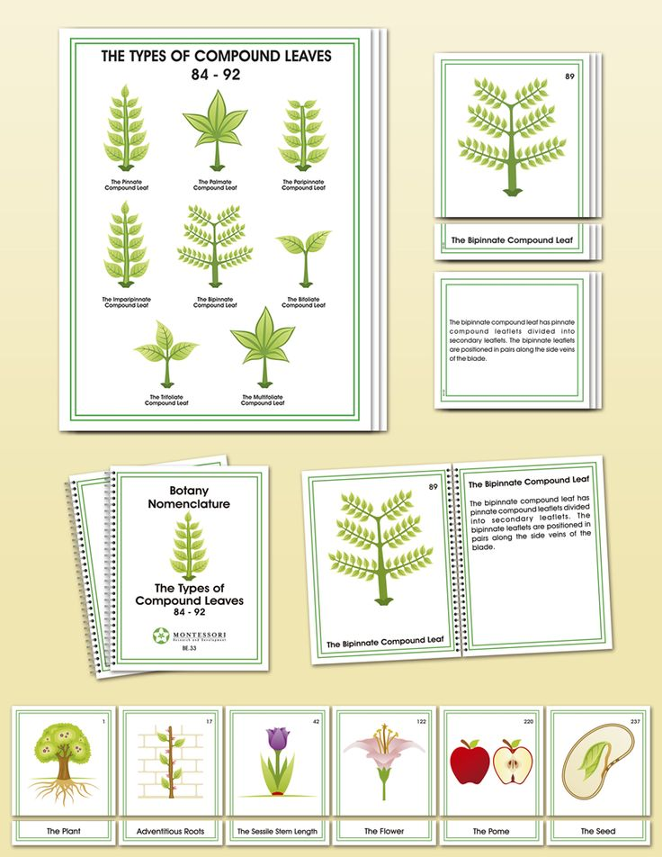 Botany Elementary Nomenclature | Montessori Research and Development - Montessori materials, teacher manuals and books