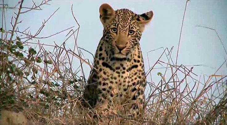 (3) Twitter National geographic wild, Wild safari