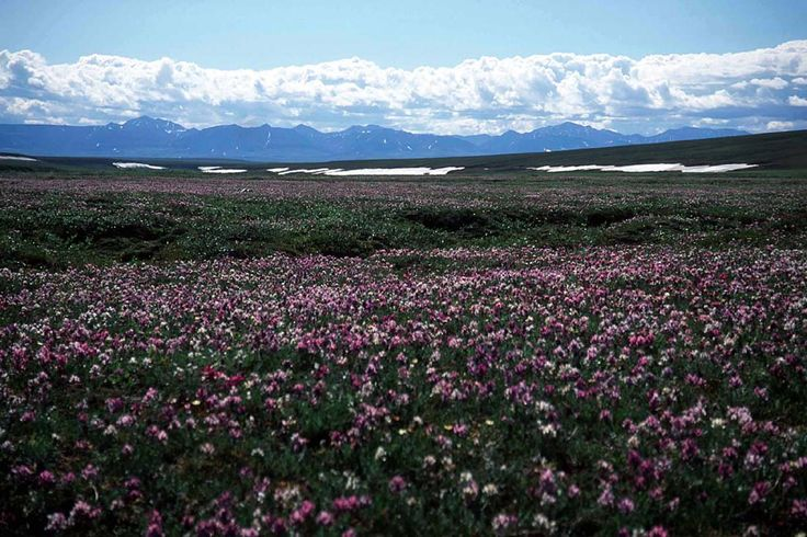 Arctic National Wildlife Refuge The Arctic National Wildlife