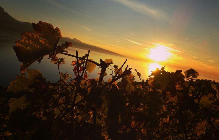 Magnifique coucher de soleil sur le Lavaux.