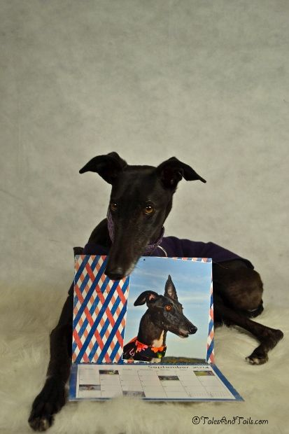 Calendar Girl -- Tales and Tails