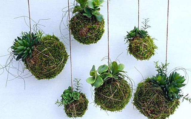 Kokedama hanging plants
