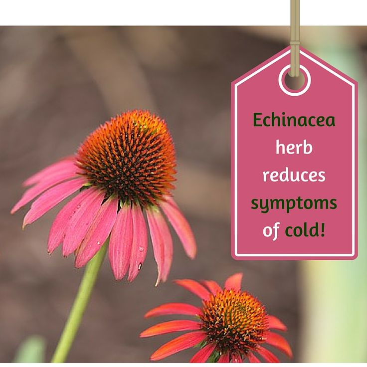 No more cold this winter know how?  For all those who frequently catch cold try this age old remedy. A 2007 meta­analysis showed that  Echinacea herb reduces symptoms of cold. If you feel you can catch cold lately then consume  three grams daily in a capsule form.  ‪#‎Echinaceaherb‬ ‪#‎curecold‬ ‪#‎naturalremedy‬ ‪#‎capsule‬ ‪#‎humorganic‬