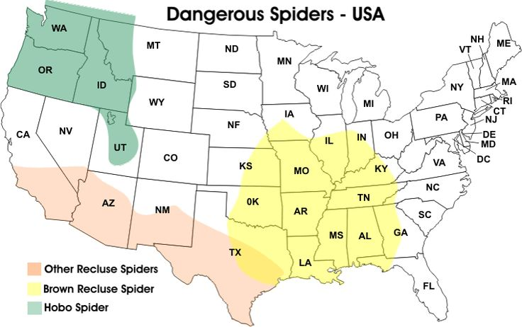 Habitats Of The Three Most Venomous Spiders In The United States - Map of poisonous spiders in the us