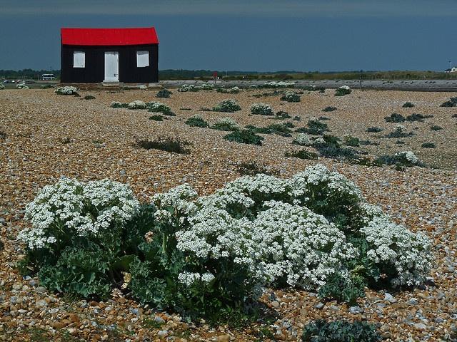 19 besten Beach huts Bilder auf Pinterest | Maritim, Strandhütten ...