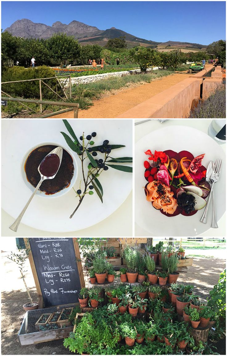 Babylonstoren is a top hotel and restaurant in the Cape Winelands - a must if you are a foodie planning a trip to Cape Town! Think freshest of fresh produce with over 300 edible plants grown on site! #organic #foodie #travel #luxurytravel