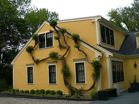 houses painted yellow | hope you enjoyed our little tour of cape