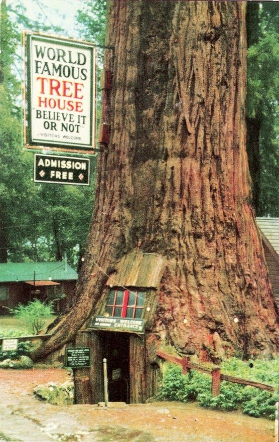 Steven Krohn Google World Famous Treehouse Near Leggett Ca Usa