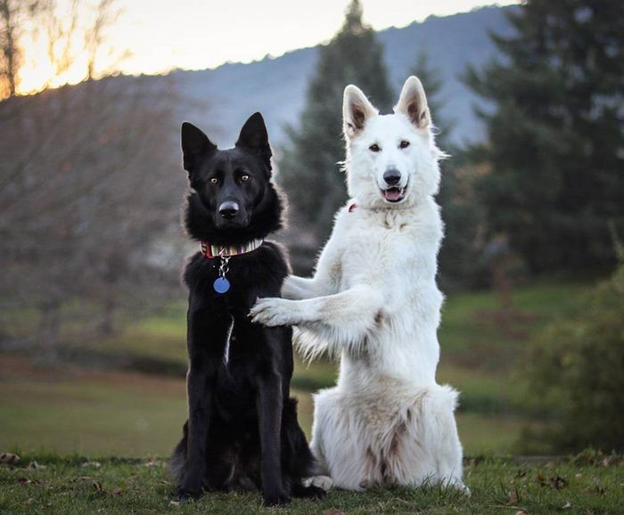 Best Koiria Images On Pinterest Animals Dogs And Funny Animals - Funny dog wedding photos will make your day