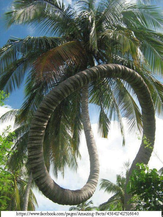 coconut tree in Kerala