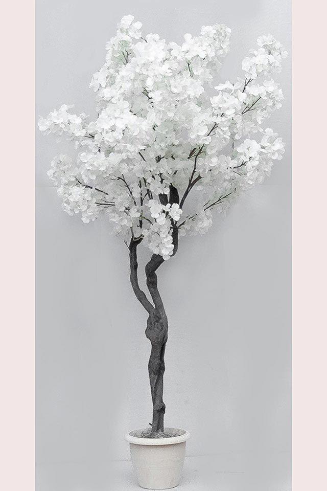 Груша дерево белое.