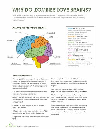 brain structures and functions worksheet essay Psy340_r3_brain_structures_functions_worksheetpdf solution preview hello again, basal ganglia: the basil ganglia is responsible for voluntary motor control, procedural learning relating to routine behaviors or habits such as eye movements, cognitive and emotional functions.