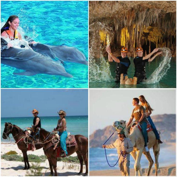 EMR | 2015   Vous rêvez de nager avec les dauphins, de profiter de paysages à couper le souffle à travers la jungle Maya à dos de chameau ou encore à cheval ? Ou bien d'expérimenter la plongée spéléologique dans la fameuse réserve naturelle de Rio Secreto ? Renseignez-vous et inscrivez-vous directement auprès du Bureau des activités de l'hôtel Moon Palace à Cancun. #EMR15 #Cancun #EagleManager #EagleManagerRetreat15 #ForeverDream