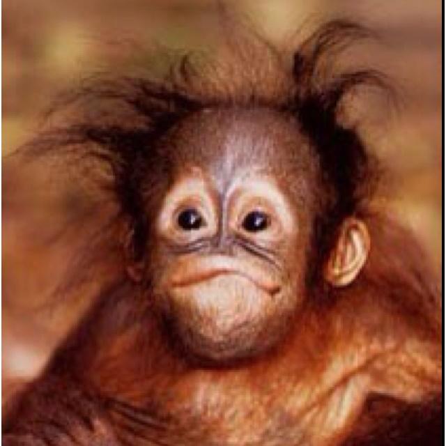 ahhh baby orangutan :)))