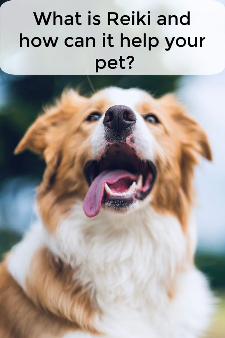 Natural health care for dogs