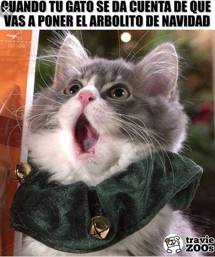 Gatos Y Más Gatos Meme Gato Memes De Animales