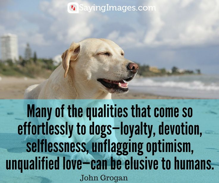 Inspirational Pet Quotes: 1000+ Images About Cute Quotes On Pinterest