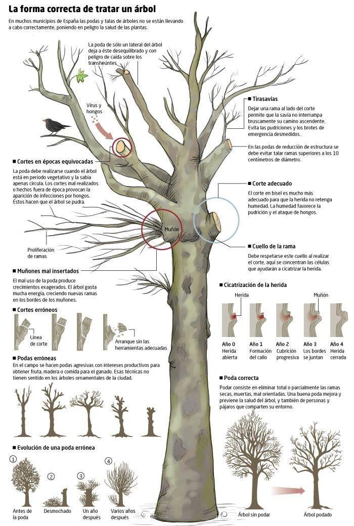 Conoce la manera más adecuada para podar un árbol sin dañar su salud y, con él, la de todos nosotros.