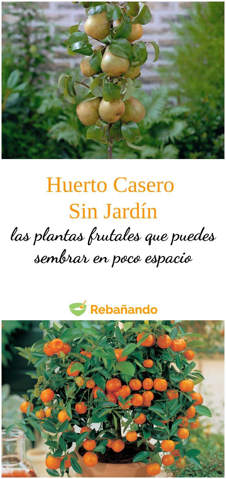 Estas son las frutas que puedes cultivar sin tener un jardín Fresco, Home Hacks, Dinner, Fruit, Healthy, Tips, Food, Decor, Gardens