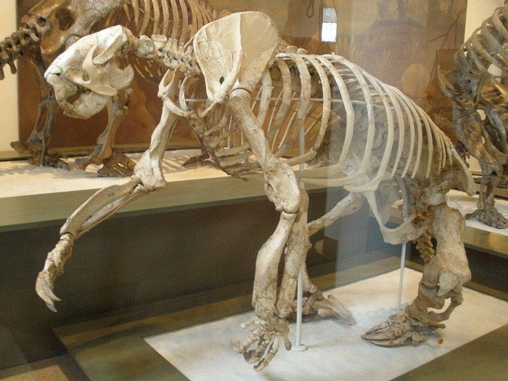 arkansas giant ground sloth megalonyx go to little rock to see it