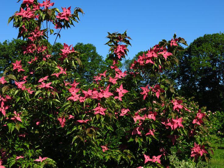 9 best native mississippi trees images on pinterest