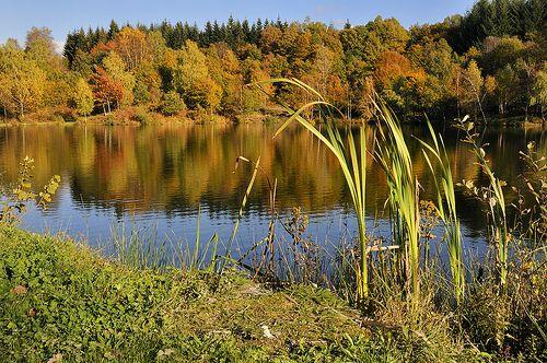 L'automne sur le Plateau des Mille Etangs, Haute-Saône, Franche-Comté, France. Exposition en ligne réalisée par l'Office de Tourisme des Mille Etangs (www.les1000etangs.com)