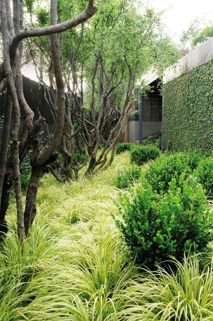 """Textured plantings on the floor and creepers on the walls help to absorb sound. Clumps of grasses thickly cover the """"floor"""" of the garden but the walls have been utilised by growing self-clinging creepers on them. Evergreen climbing fig, is particularly effective for sound absorption."""