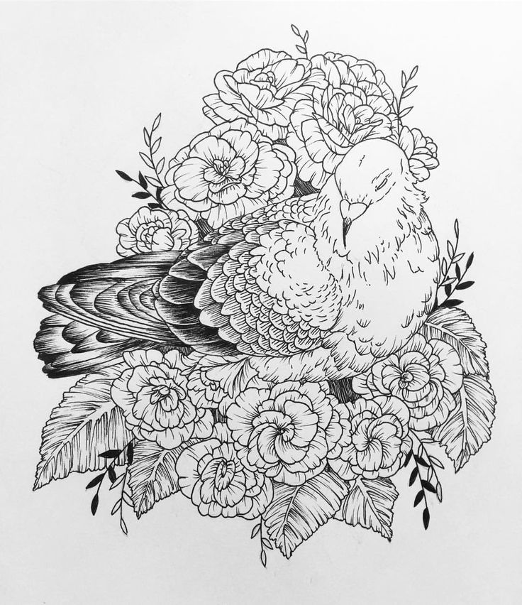 Inspired by @pussayfoot 's photograph of a street pigeon in San Francisco #pigeon #begonia #flowers #leaves #feathers #ink #linedrawing #drawing #art #illustration #tattoo #flash