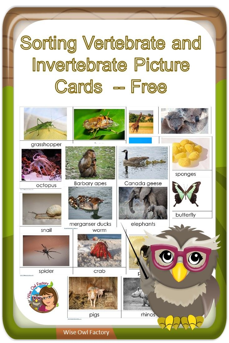 Invertebrates and Vertebrates Card Sort Free PDF -- Pre-K and primary grades and could be used in a science center. via @wiseowlfactory