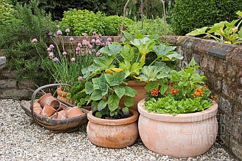container garden...