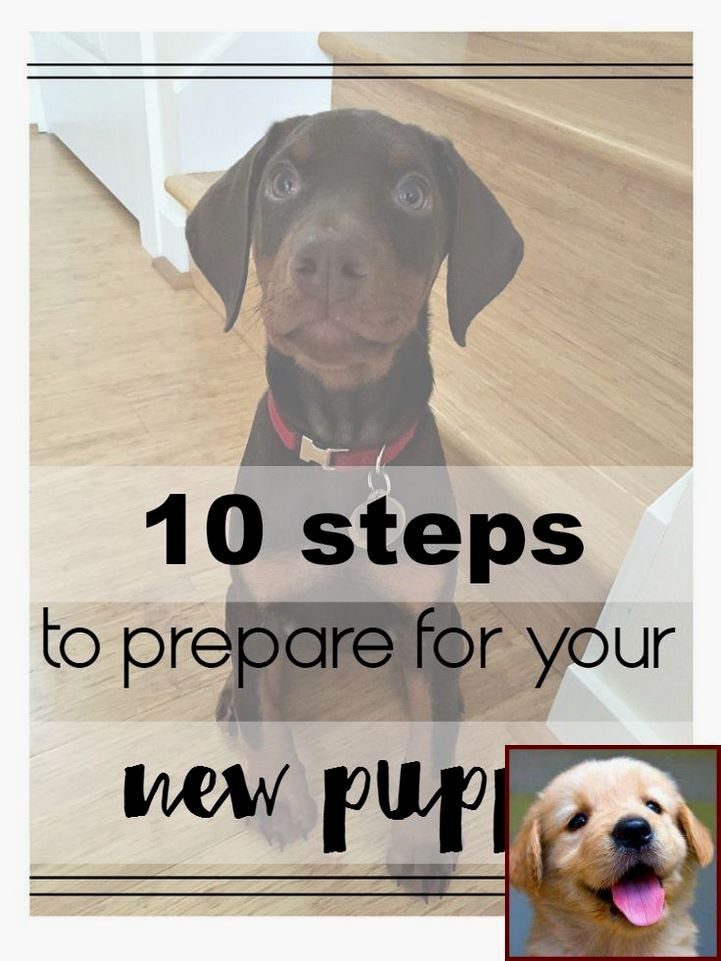 How To Train Dog Use Litter Box Tip 140342435 Puppy Training Dog Behavior House Training Puppies