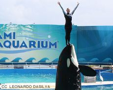 ⭐BREAKING ⭐ Seaquarium Slapped with Notice of Lawsuit over Cruelty to Endangered Orca