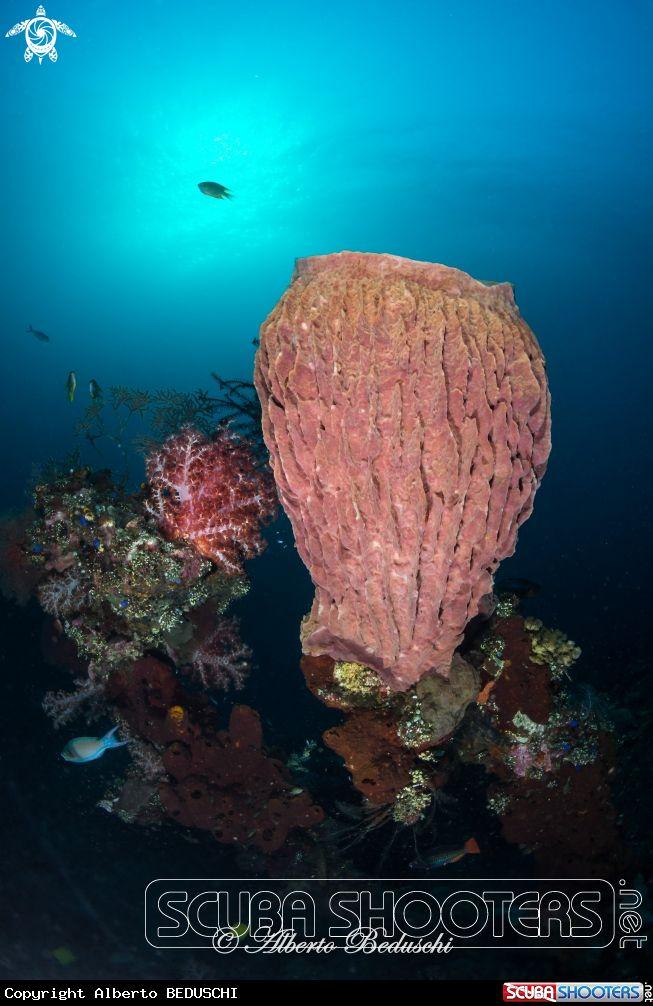 Sponge in Tulamben - Bali