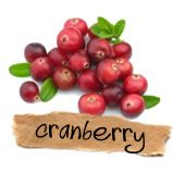 Cranberry is een bes van de cranberry struik. Ze zijn een van de grotere gewassen in Noord Amerika. De naam cranberry komt van craneberry, van de kraanvogel, omdat de eerste kolonisten vonden dat de bloemen op een kraanvogel leken. Ze staan ook bekend als mossberry, fenberry, en sassamanash. Cranberry sap en gedroogde cranberries voedingssupplementen hebben meerdere werkingen, maar waar ze bekend om staan is dat ze de urineweg goed weten te reinigen en zodoende infecties tegen gaan.